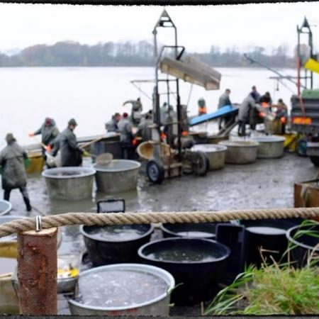Deváťáci na výlovu rybníka